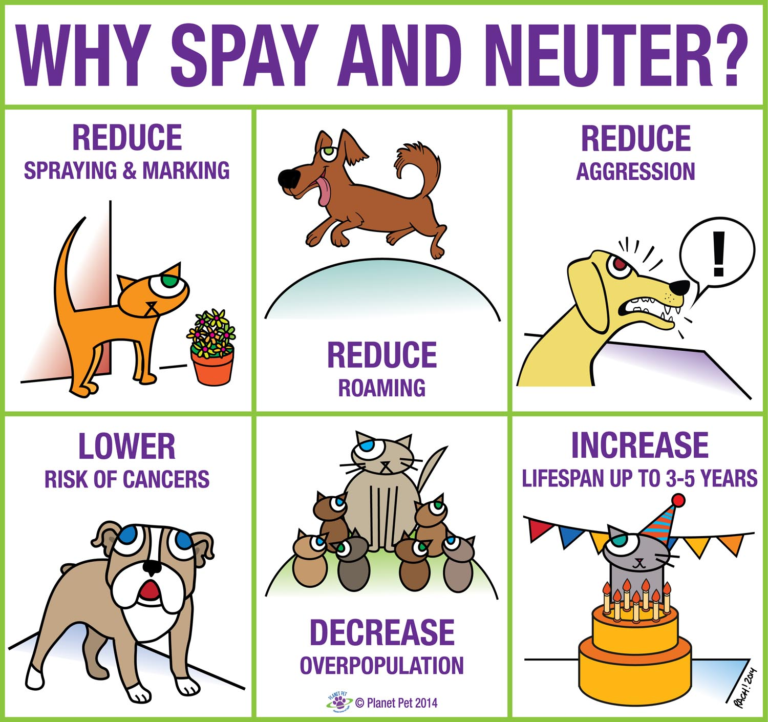 Can I Neuter My Cat At Home